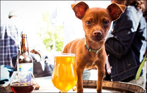 Dog-Friendly Spots on the UWS