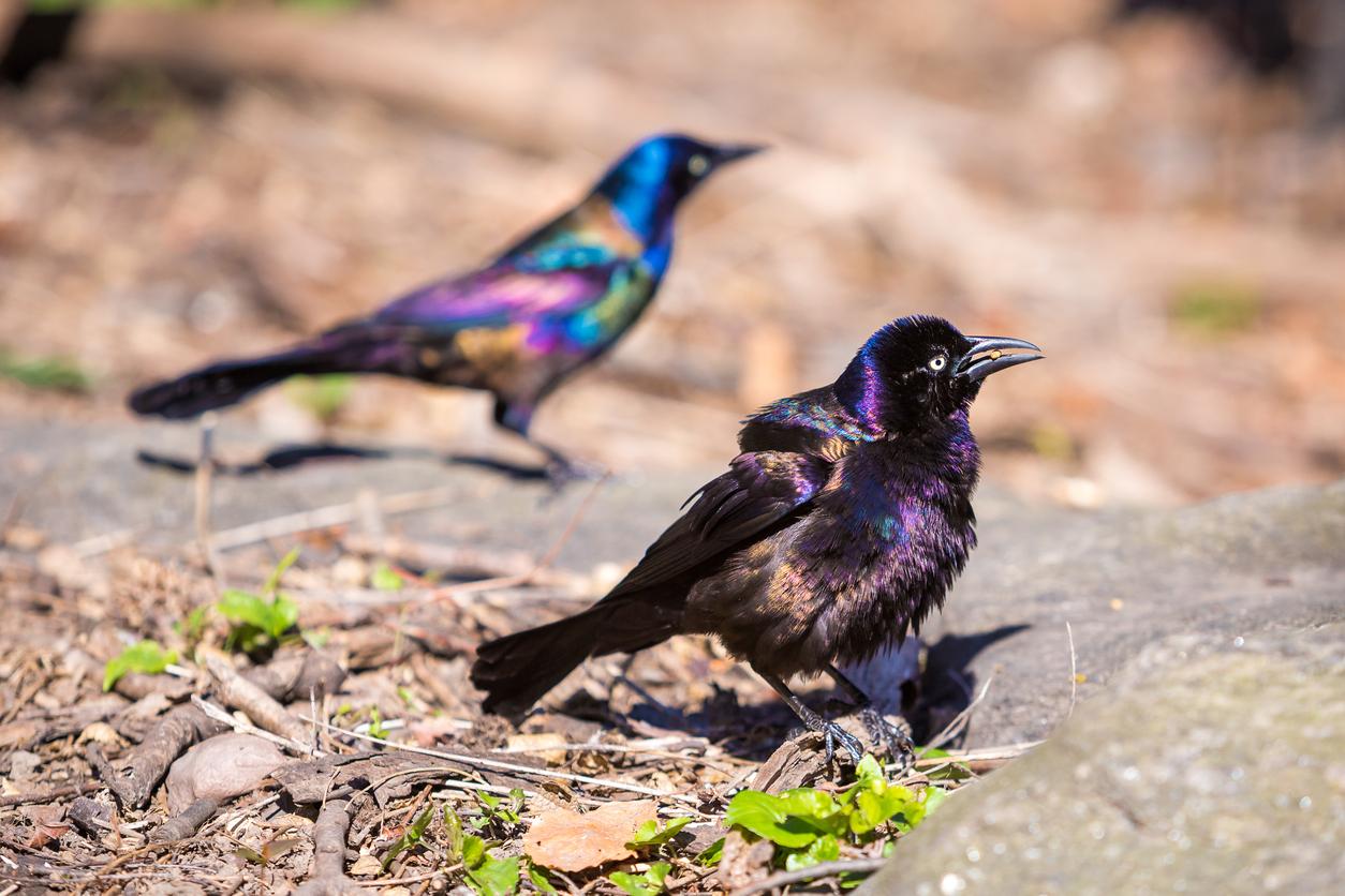 Birds: Winter Watch