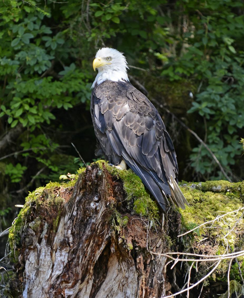 Bird Watch: Eagles