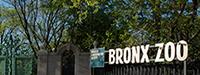 Bronx image