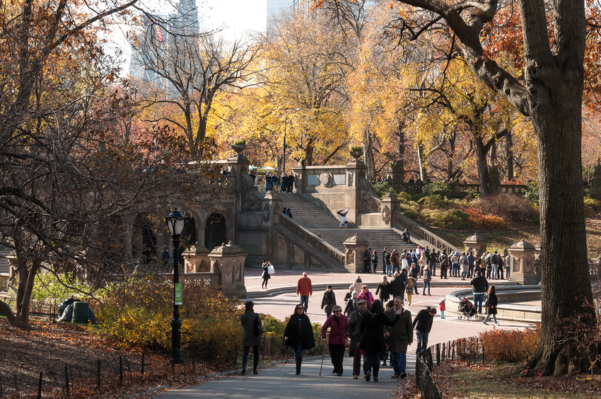 Top Five Things to Do in NYC This November image