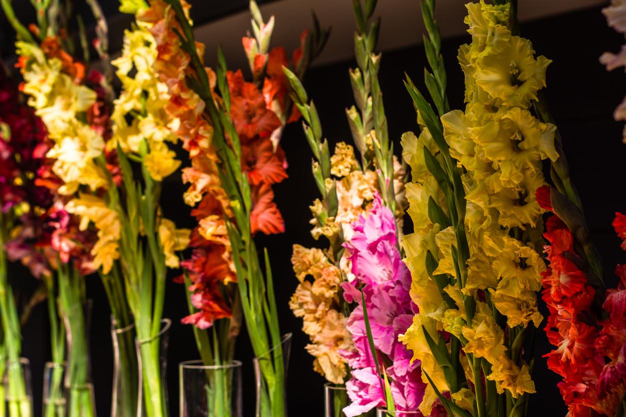 Macys Annual Flower Show