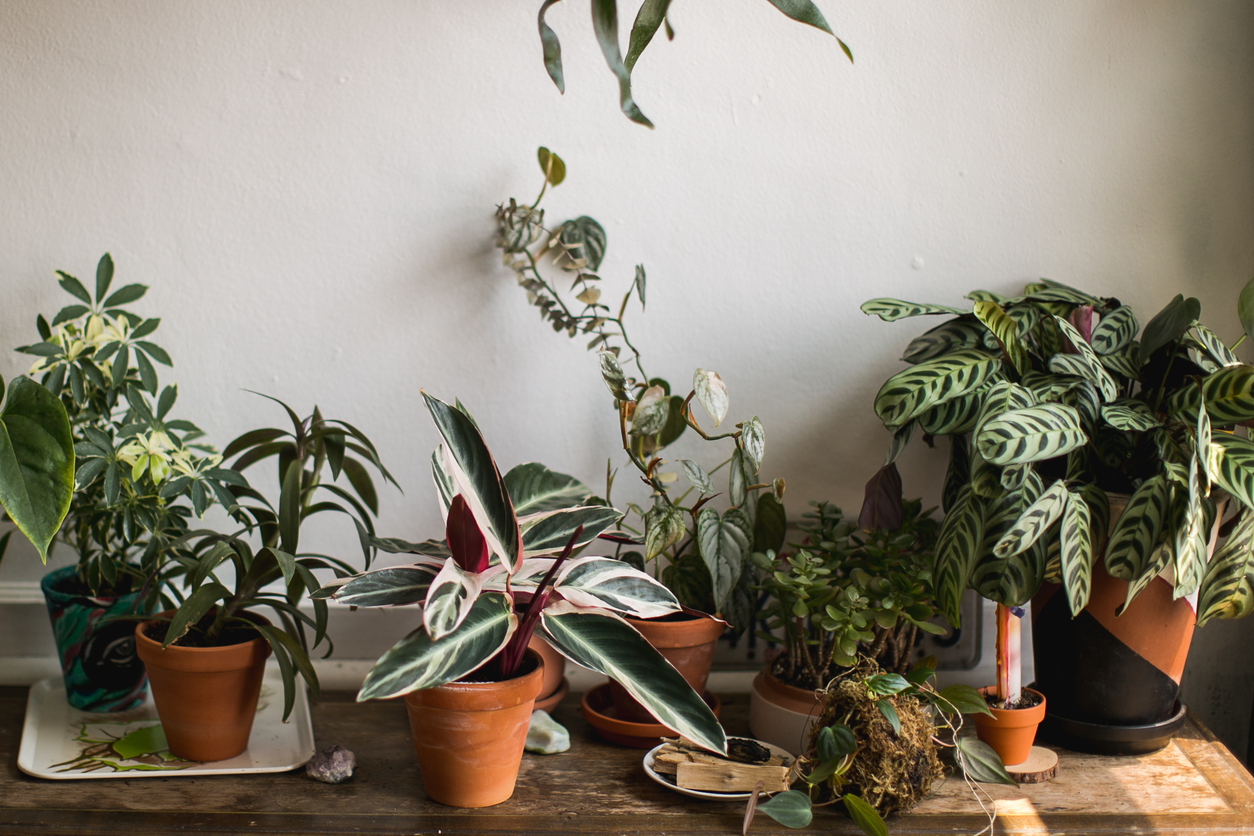 Indoor Plants that are easy to maintain