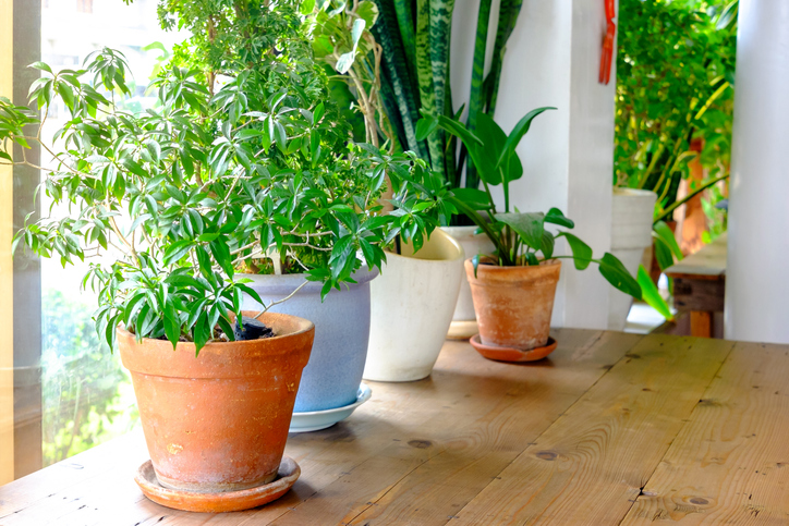 5 Ingenious Plant Tricks You Havent Tried Yet